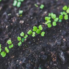 Audencia cultive son jardin !