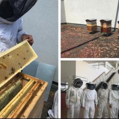 Premier atelier d'apiculture au Médiacampus !