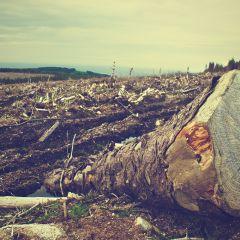Sortie du rapport WWF sur la déforestation importée en UE