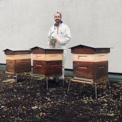 Bienvenue aux abeilles d'Audencia !